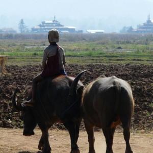 Croisière Privée sur l'Irrawaddy 17