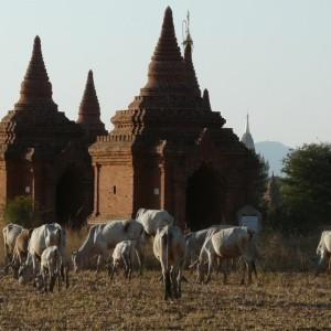 Croisière Privée sur l'Irrawaddy 37