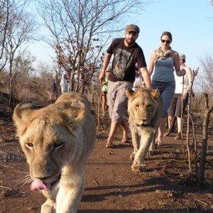 Afrique Australe Extrême 5