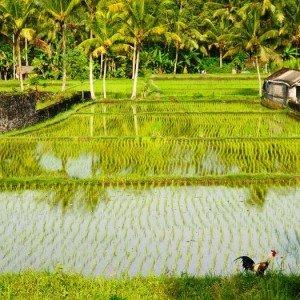 Circuit famille Singapour Java Bali Moyo 37