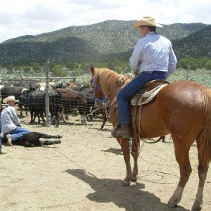Cow Boy aux États-Unis 1
