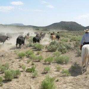 Cow Boy aux États-Unis 3