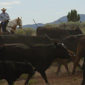 Cow Boy aux États-Unis 5