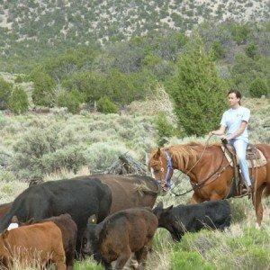 Cow Boy aux États-Unis 8