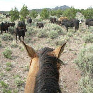 Cow Boy aux États-Unis 11