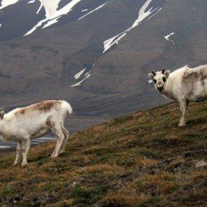 Expériences arctiques Laponie et archipel des îles du Svalbard 23