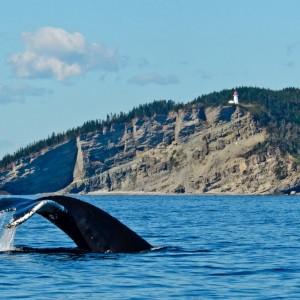 Baleine-Cap-Gaspé, parc national du Canada Forillon © Le Québec maritime-Marc Loiselle