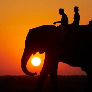 elephants_25