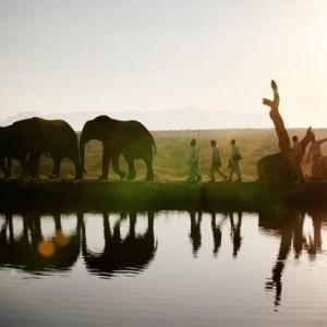 elephants_41