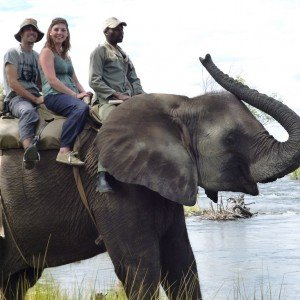 BOTSWANA SAFARI ELEPHANT (3)
