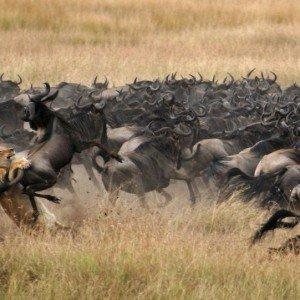 Masai Mara KENYA (1)
