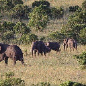 Masai Mara KENYA (2)
