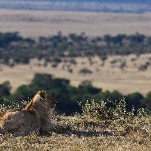 Masai Mara KENYA (3)