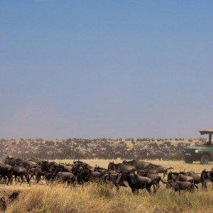 Masai Mara KENYA (31)