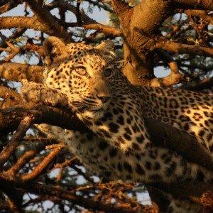 Masai Mara KENYA (8)