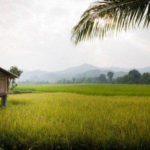 Muang La Resort Laos (58)