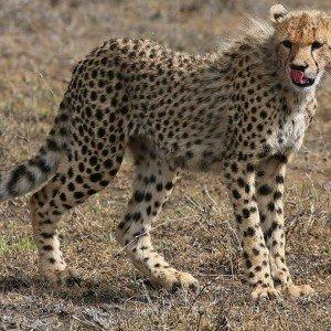 OL DONYO LODGE KENYA (4)