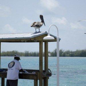 BMT_2712 – Bimini copyright The Islands Of The Bahamas