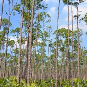 DSC_0744 Grand Bahama Nature tours Grand Bahama island Copyright The Islands Of The Bahamas