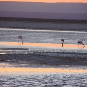 Desert d'Atacama 3©Explora
