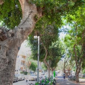TEL AVIV_©Israeli Ministry of Tourism_Dana Friedlander