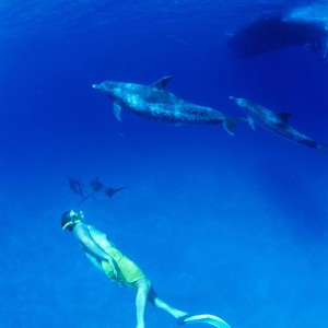 Actdol06—Bimini-copyright-The-Islands-Of-The-Bahamas