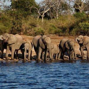 Afrique Australe Extrême 4