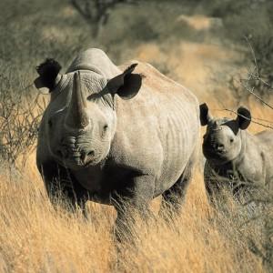 Afrique du sud pour couple 19