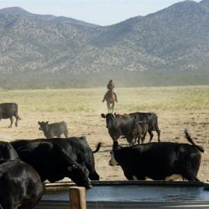 Cow Boy aux États-Unis 17