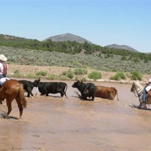 Cow Boy aux États-Unis 20