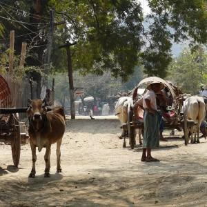 Croisière Privée sur l'Irrawaddy 28