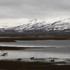Expériences arctiques Laponie et archipel des îles du Svalbard 22