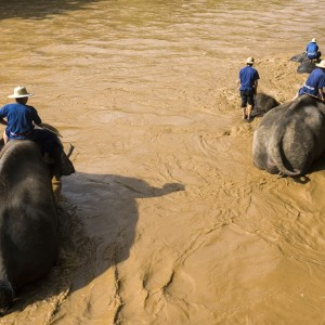 CHIANG MAI ELEPHANTS shutterstock_158059814 Copyright Jukurae