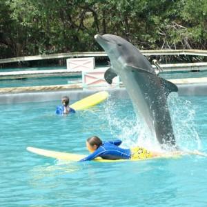 Miami-Seaquarium-Dolphin-encounter-air