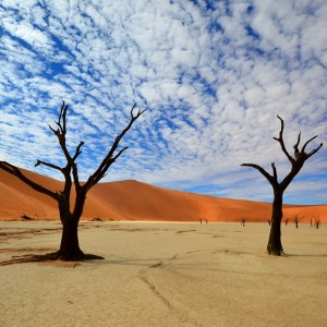 NAMIBIE shutterstock_74350357  Copyright Karel Gallas