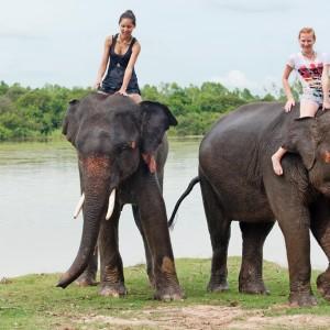 THAILANDE CHIANG MAI ELEPHANT shutterstock_59789563  Copyright Muellek Josef