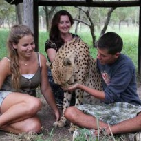Rejoins la communauté des guépards