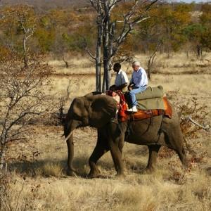 BOTSWANA SAFARI ELEPHANT (1)
