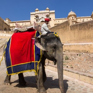 INDE AMBER FORT JAIPUR  Copyright  nevenm