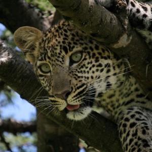 Masai Mara KENYA (14)