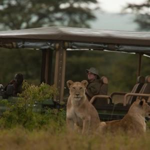 Masai Mara KENYA (28)