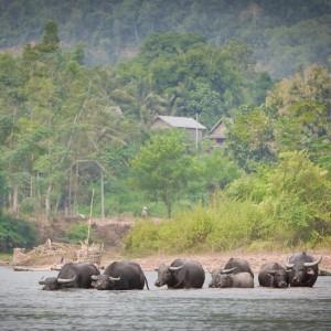 Muang La Resort Laos (3)