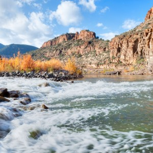USA Arizona Salt River ( Copyright  Anton Foltin )