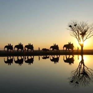 elephants_3