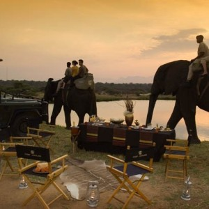 elephants_35