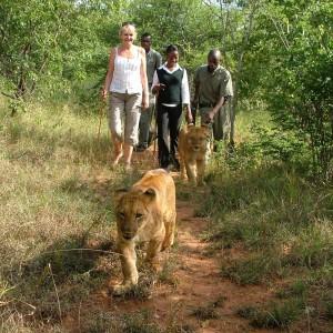 marche avec les lions (3)