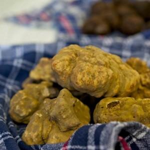 truffe blanche © Savini Tartufi