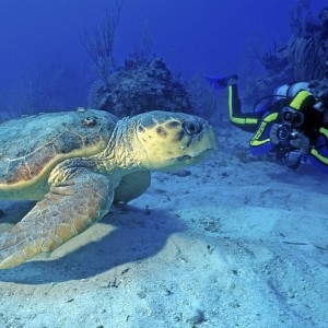 Ste Lucie_Scuba diving – turtle ©St. Lucia Tourist Board